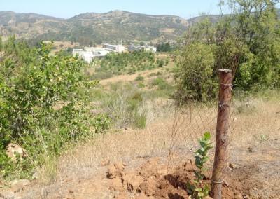 Reforestación-Casablanca